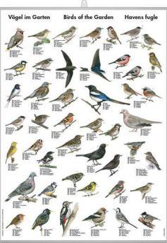 Havens Fugle